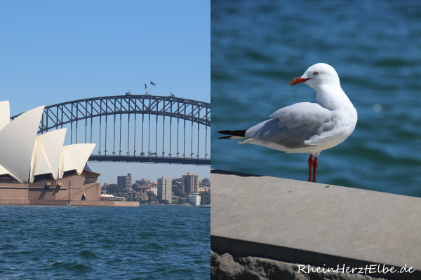 Sydney_7_rheinherztelbe