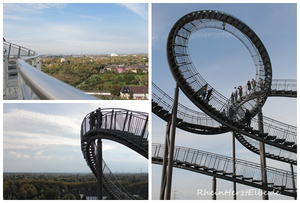 Tiger & Turtle 5