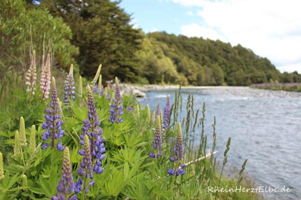 Milford Sound_7