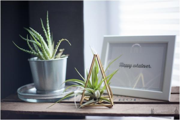 Wanddekoration Himmeli mit Luftpflanzen rheinherztelbe DIY