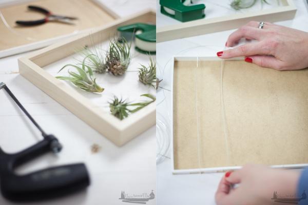 Wanddekoration mit Luftpflanzen rheinherztelbe DIY