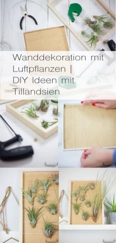 Wanddekoration mit Luftpflanzen rheinherztelbe
