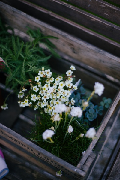 Ab in die Kiste | alte Holzkisten mit Blumen bepflanzen Rheinherztelbe