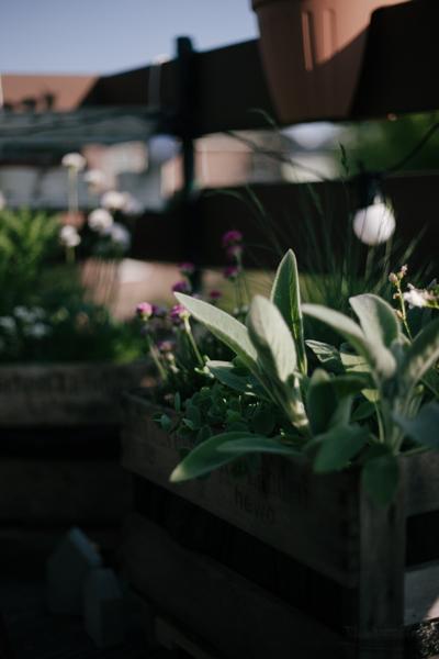 Ab in die Kiste | alte Holzkisten mit Blumen bepflanzen